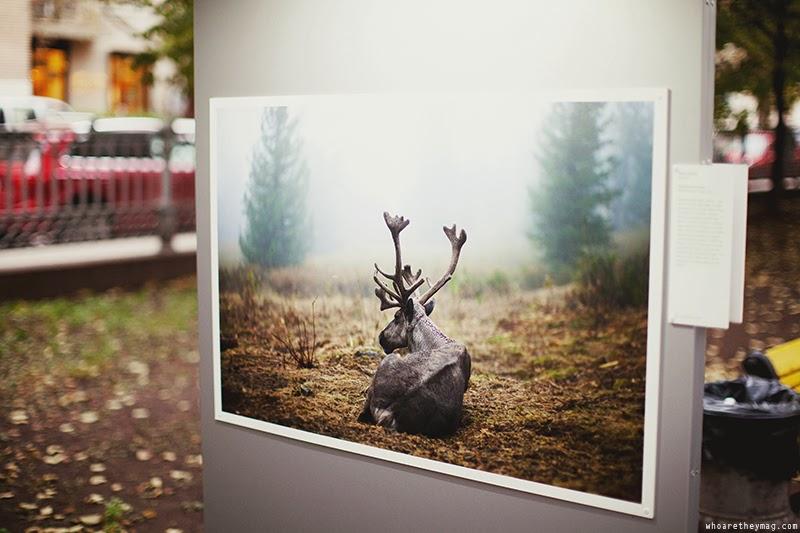 Лесные истории. Осень