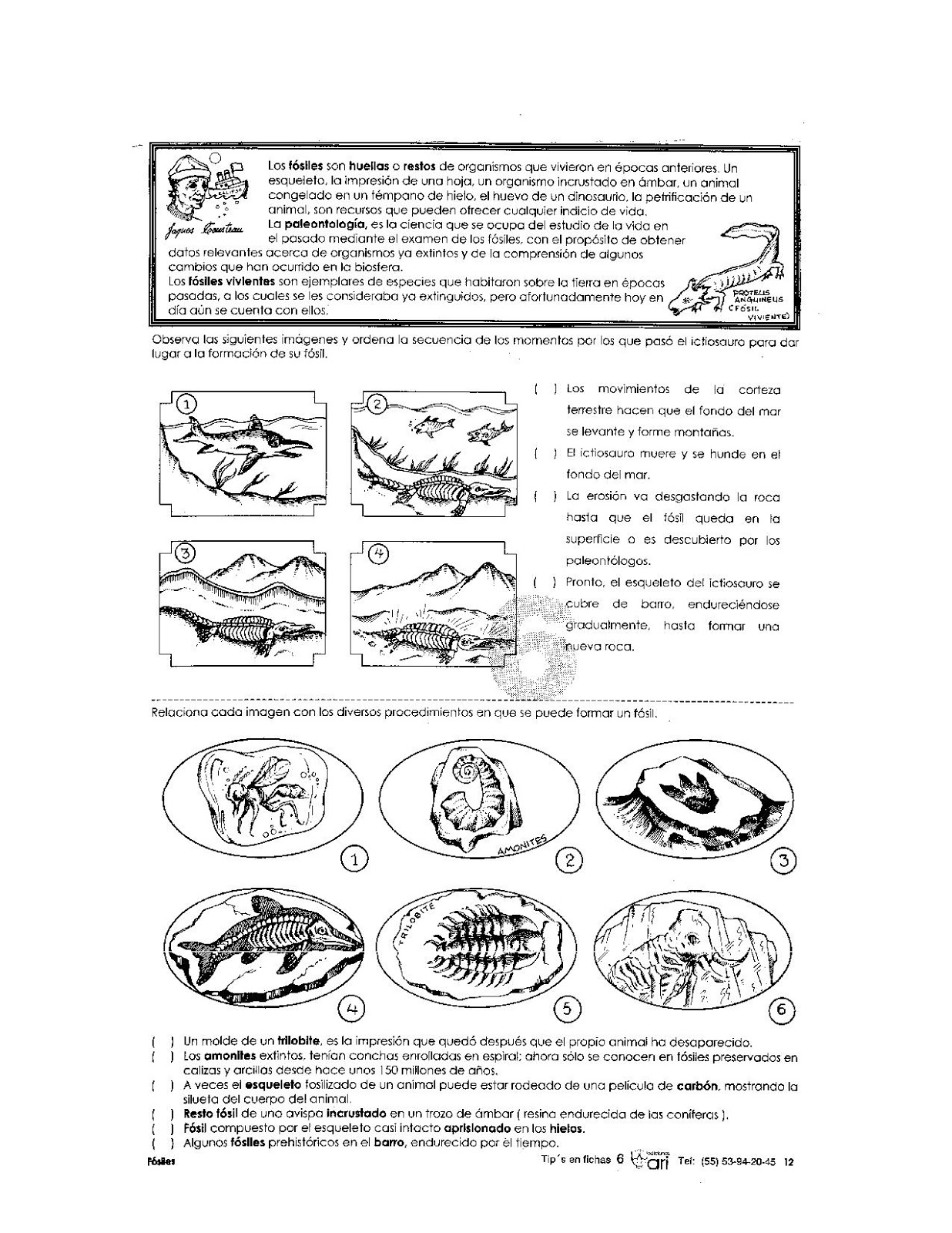 Ejercicios de los fósiles para niños
