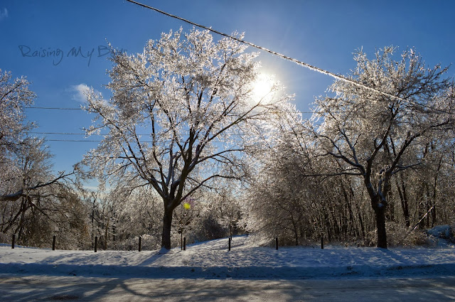 sun through icy trees