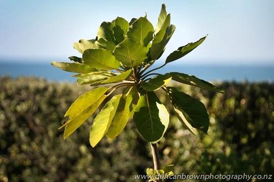 Skinny tree at Par 2 MiniGolf, on Marine Parade, Napier photograph