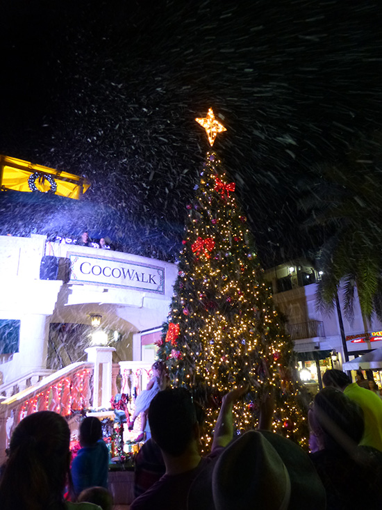 christmas tree lots miami