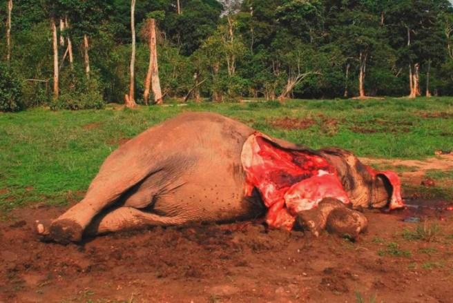 убил слана