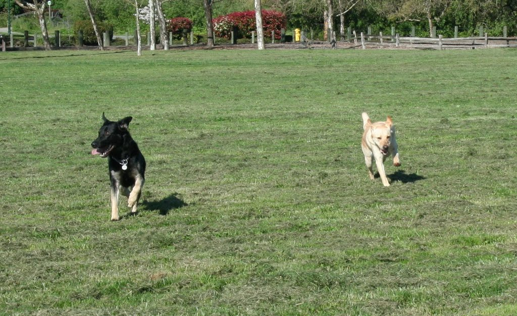 cabana and buster running alongside each other, cabana looks happy as a clam with her ears flying back and paws midair as she runs