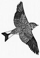 European Bird Census VN4040, first round.
