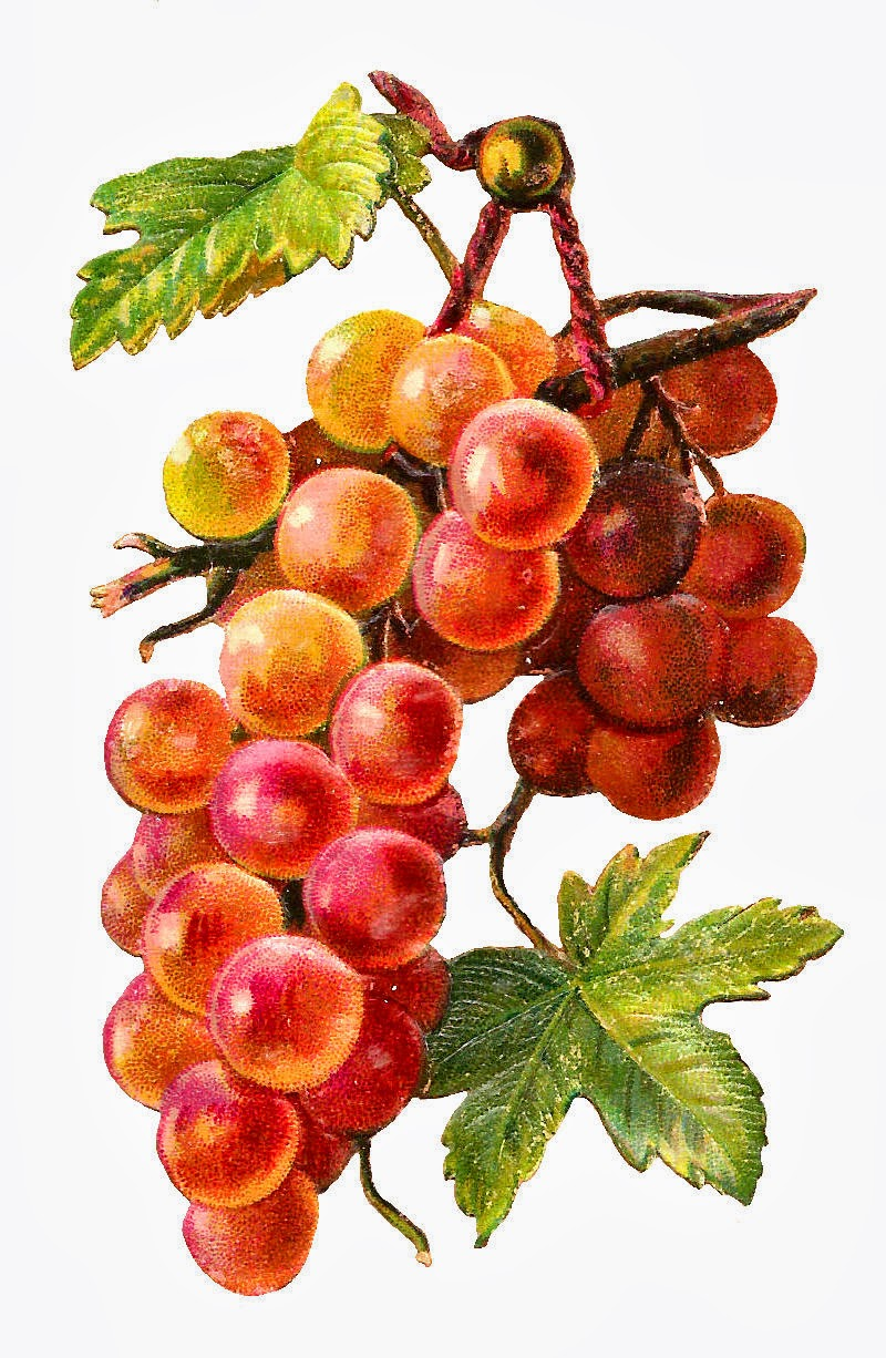Displaying 18> Images For - Red Grapes Clipart...