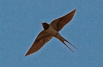 ¿Por qué emigran las aves?