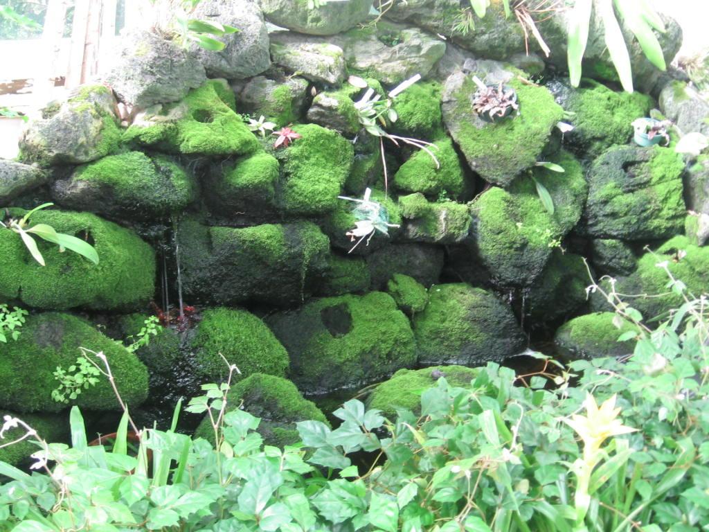Open line garden show visting buffalo ny buffalo for Landscaping rocks buffalo ny