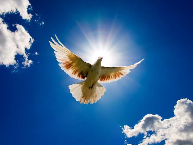 Flying White Bird Wallpaper