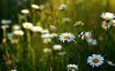 Aires de primavera (fotos de flores muy lindas)