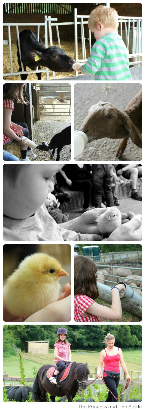 A day at Longdown Activity Farm