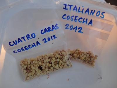 SEMILLAS DE PIMIENTOS ITALIANOS y CUATRO CARAS CONSERVADOS EN BOLSA HERMÉTICA.
