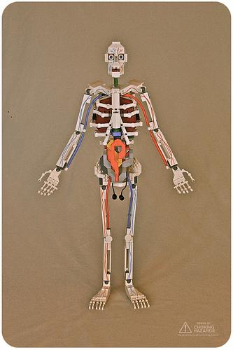 LA CIENCIA DE LA VIDA: Anatomía humana de LEGO