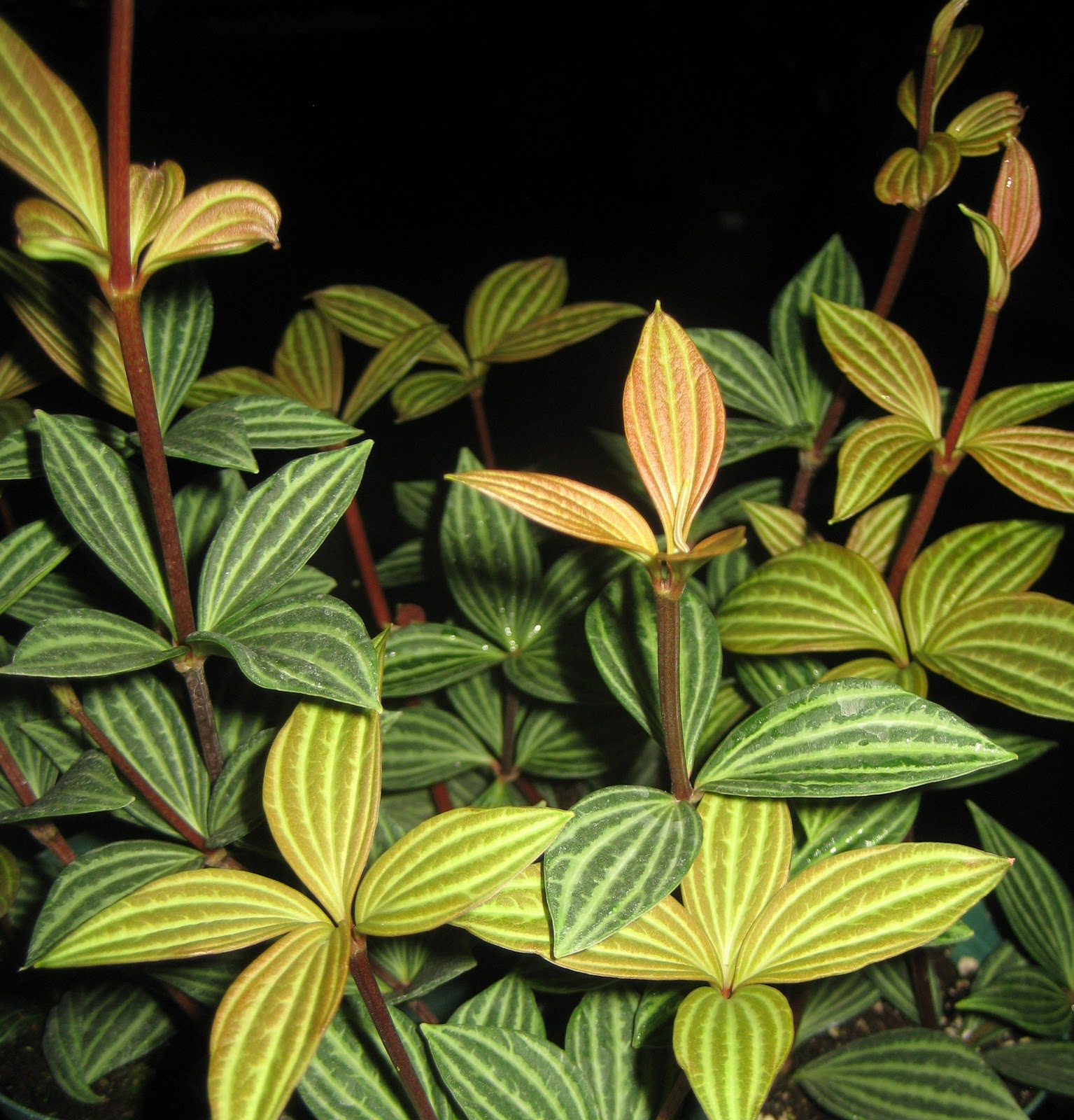 The Tattooed Gardener Top 10 Houseplants For Low Light