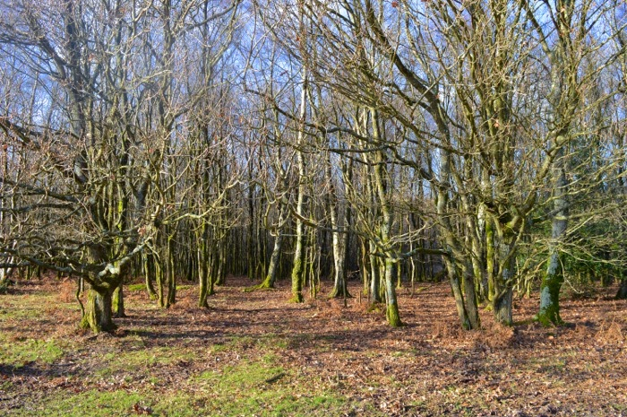 winter trees england
