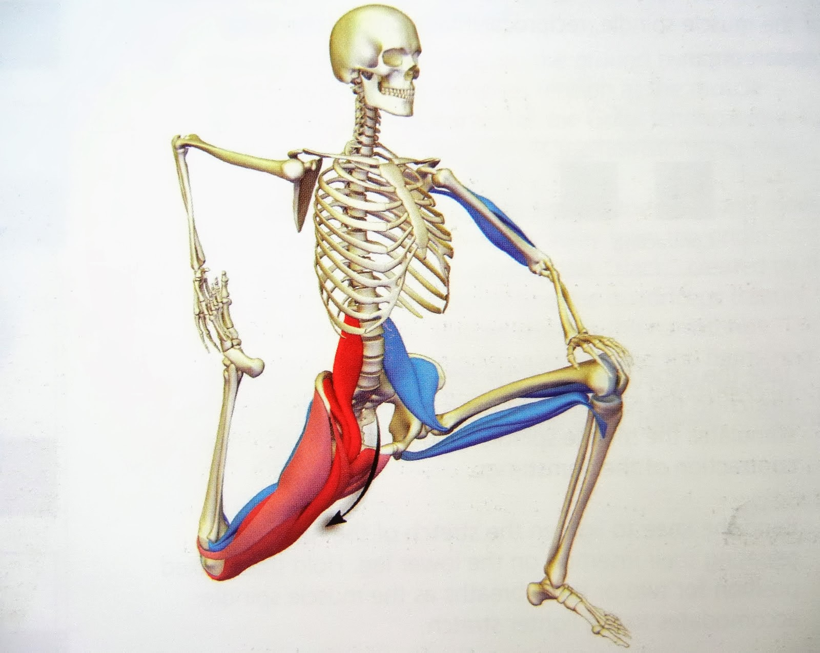 hip flexors where are they