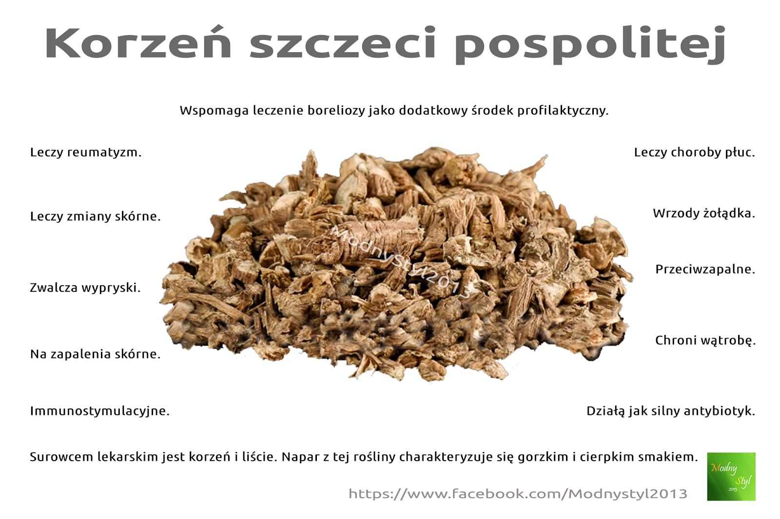 Szczeć pospolita i jej korzeń