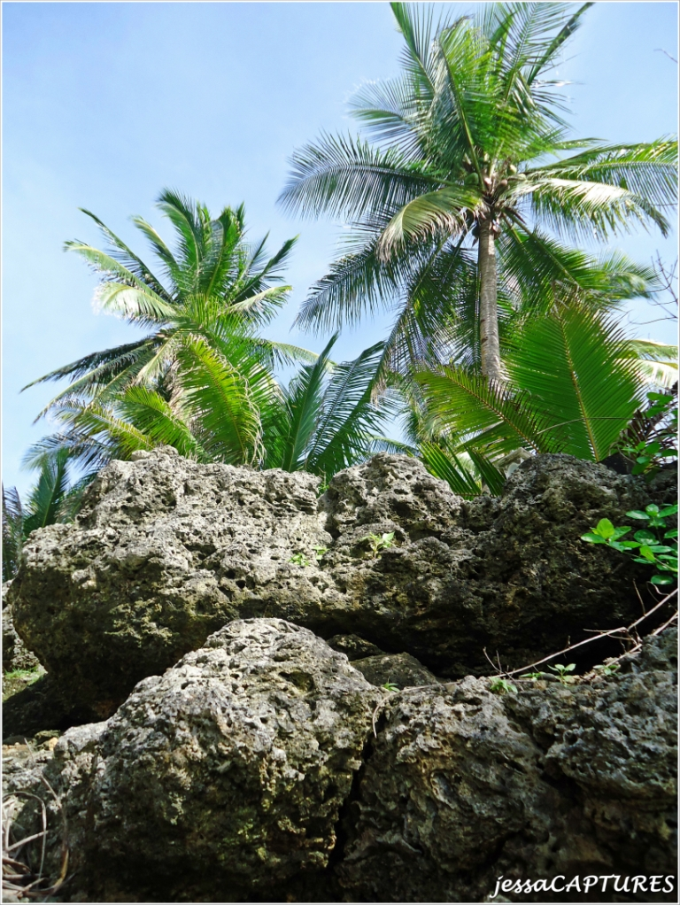 Paw Beach Resort Plano Txpawleys Island Myrtle Beach Resorts