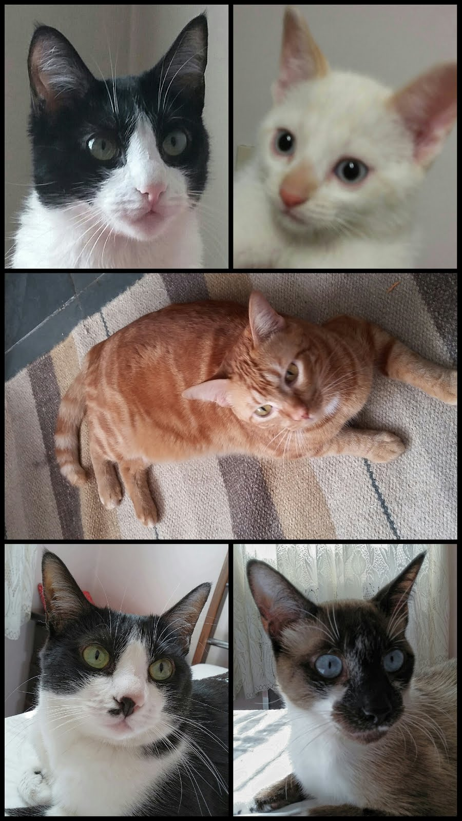 Esta é a minha Família Felina