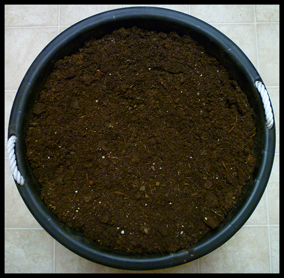 One And A Half Month Old Compost. Cool And Ready For Use.
