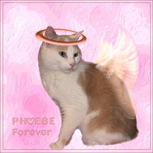 Phoebe Forever