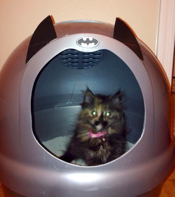 Funny cats - part 95 (40 pics + 10 gifs), cat pictures, cat sits in his batcave