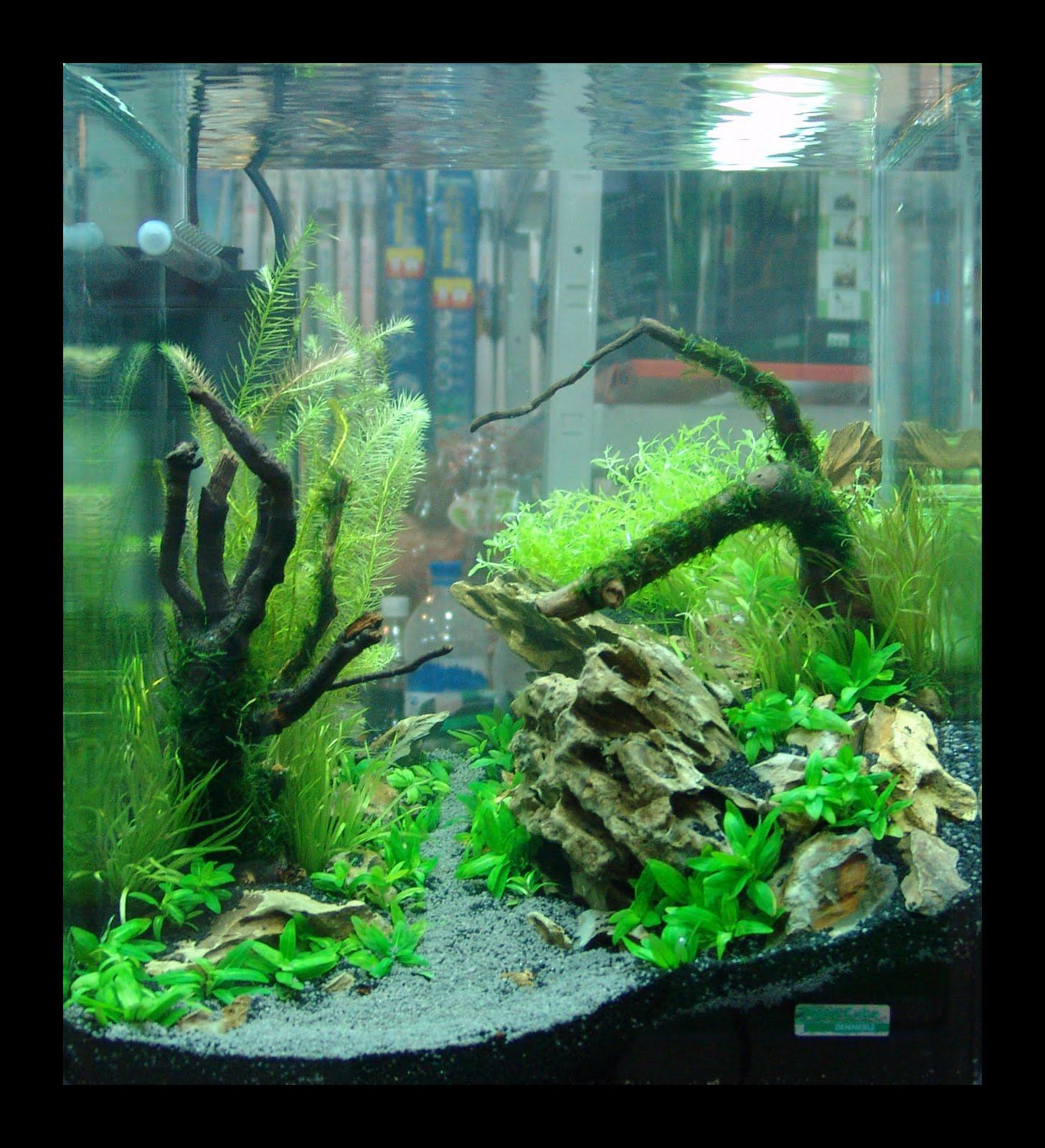 Как сделать аквариум своими руками из стекла: пошаговая инструкция 26