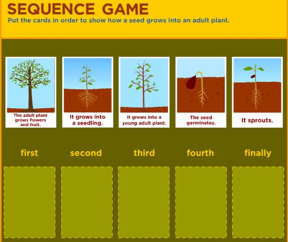 This sequence game requires students to place cards in order to show ...