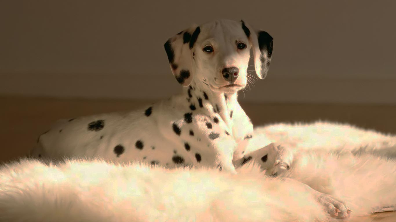 Puppy Wallpaper Free Download