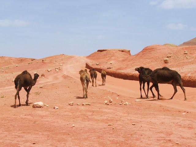 piste nel Sahara