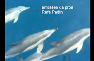 Arrosases na proa do RANA