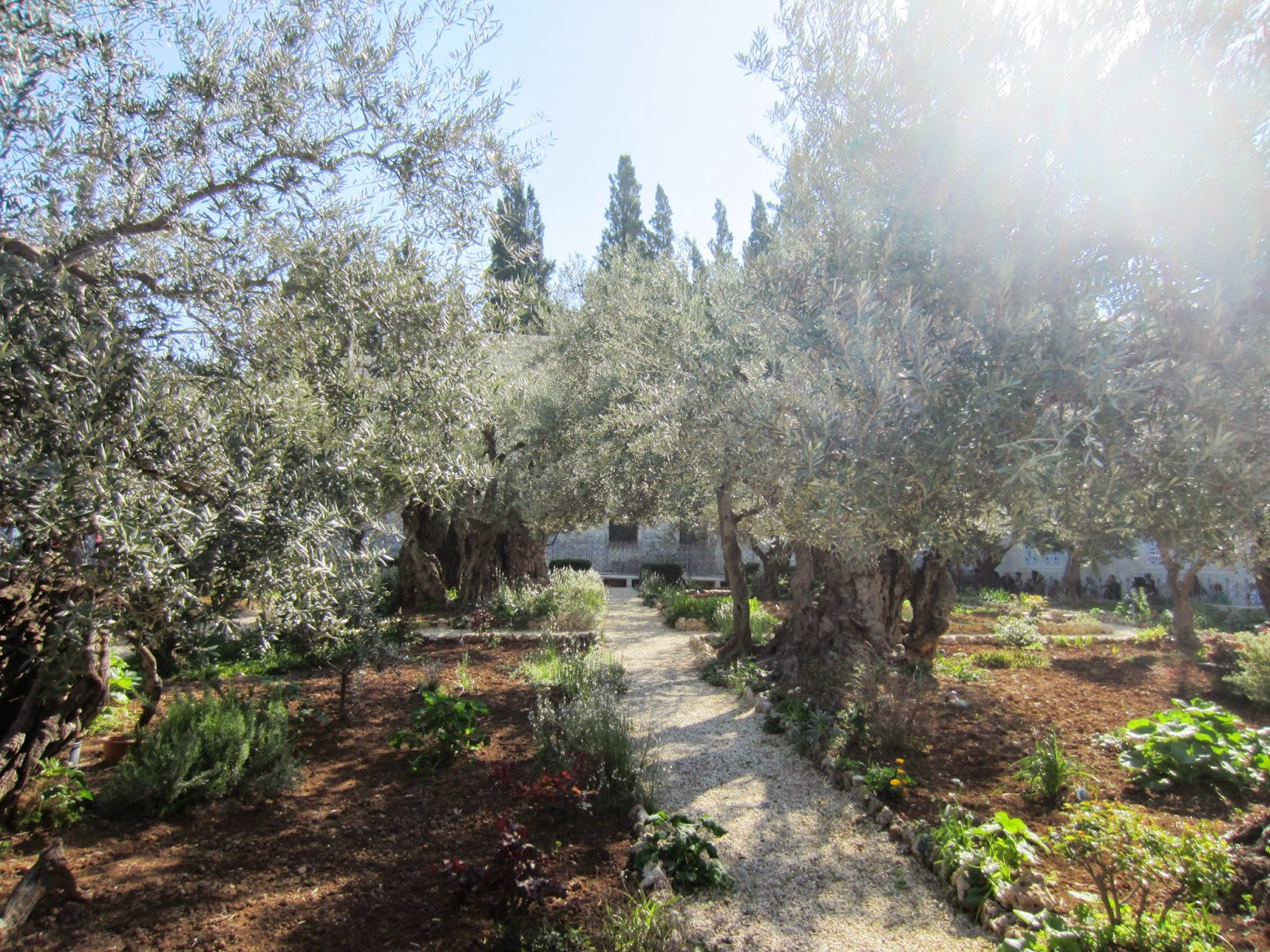 souvenir chronicles jerusalem the garden of hsemane and the