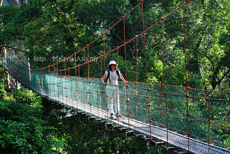 Canopy Walk at Danum Valley & Canopy Walk at Danum Valley Sabah - Malaysia Asia