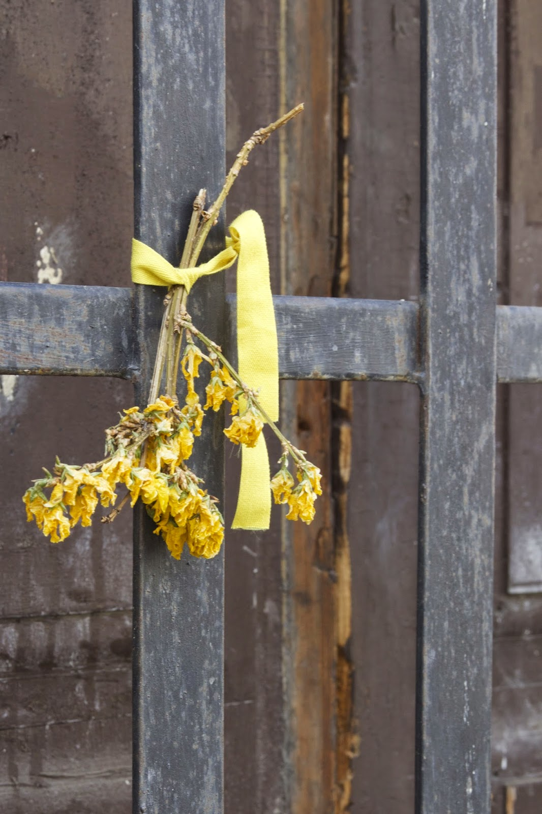 dried yellow flowers with yellow ribbon
