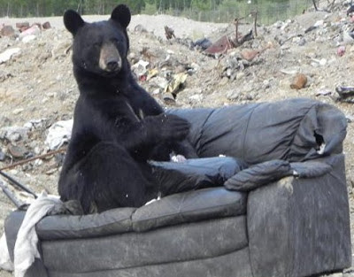 black bear, endangered species, couch, garbage, dump
