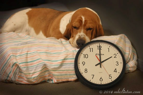 Image result for daylight savings time dog