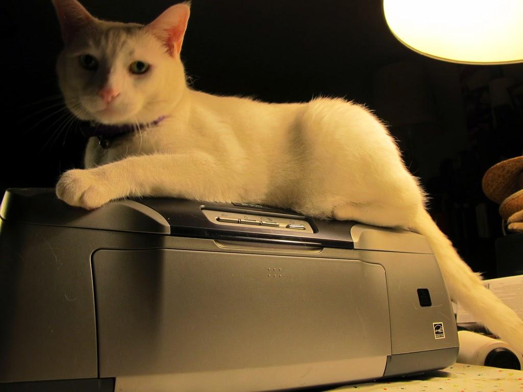 gato arriba de impresora epson