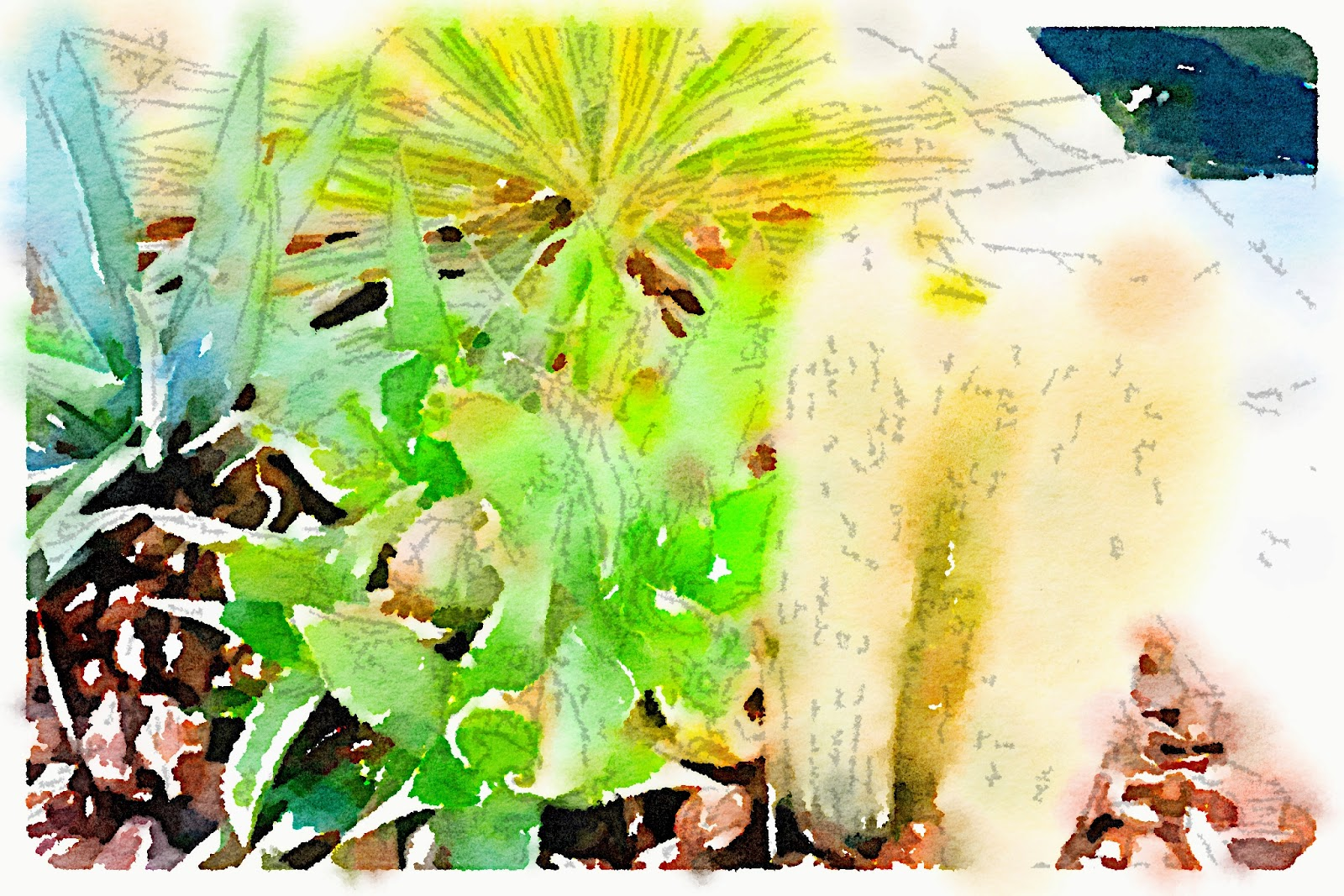 waterlogue,aquarelle,illustration,photos,bensimon,bensimon hossegor,hossegor