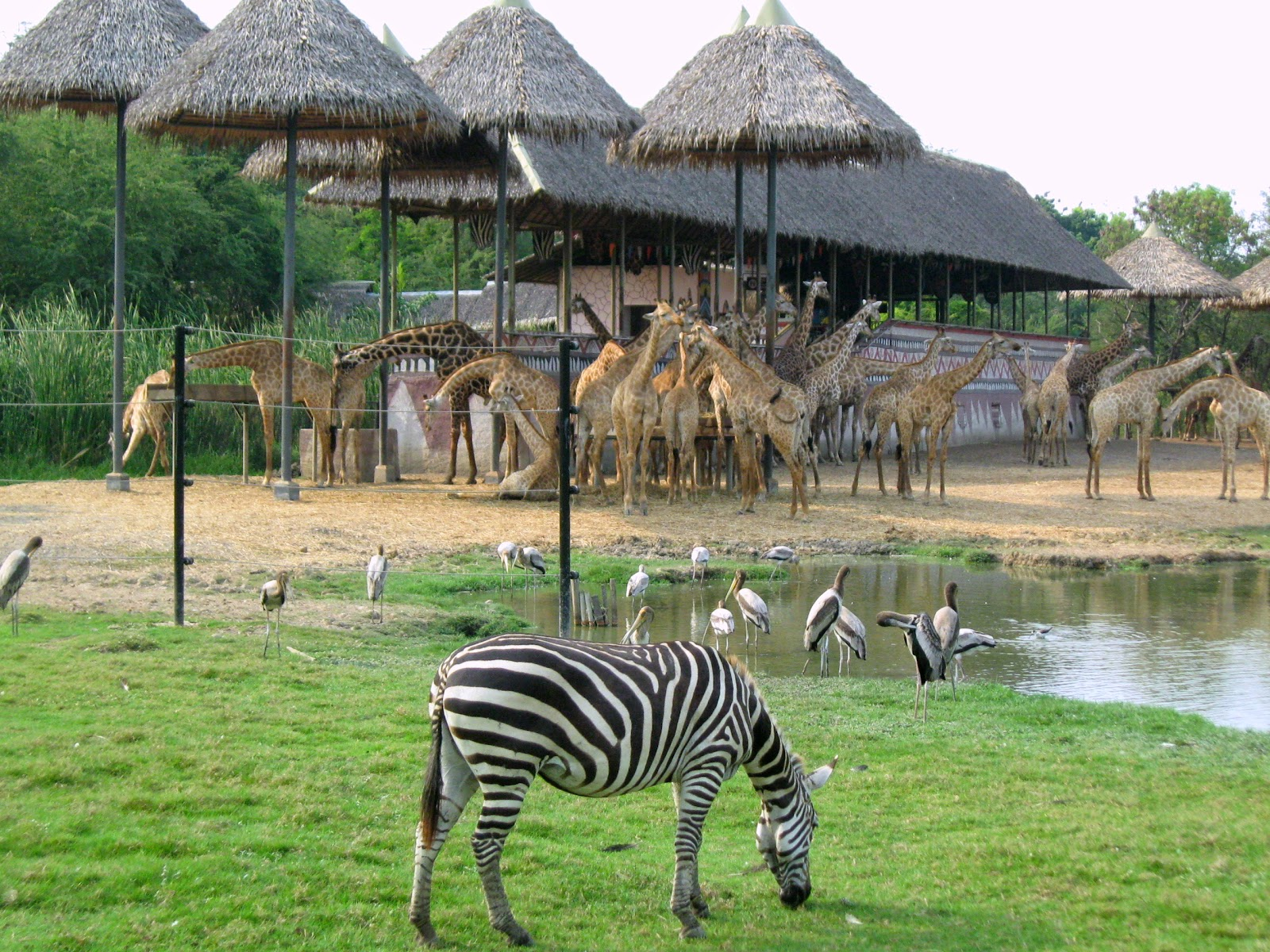 MindPatience: The Safari World - Bangkok