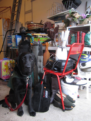 Black lab Romero is decked out in his green Future Dog Guide jacket and thick red leash, sitting near the front of our open garage. He looks unusually young in this picture, with his head slightly tilted and his wide brown eye staring curiously towards the camera. Behind Romero is a large pile of STUFF stacked on and around a big plastic table. These items have all been sorted and priced for our upcoming garage sale. The pile contains, among other things, a red metal desk chair, a blender and other kitchen supplies, two bags of kids' golf clubs, shoes and boots, a Barbie suitcase, a humidifier, a push lawnmower, boardgames, a small blue bookshelf, and many miscellaneous decorations and office supplies.
