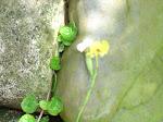 Orquídea y grieta