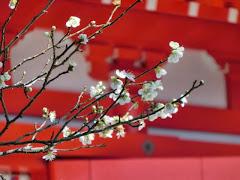 鎌倉:梅の名所