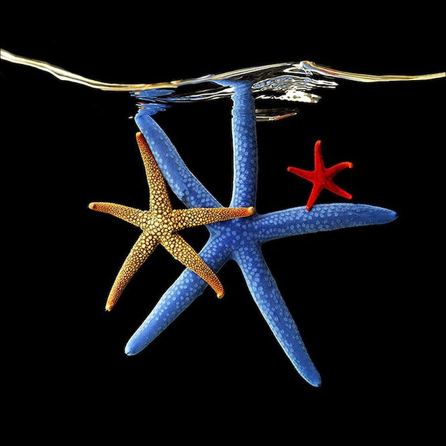 Неоновые морские обитатели от фотографа Mark Laita