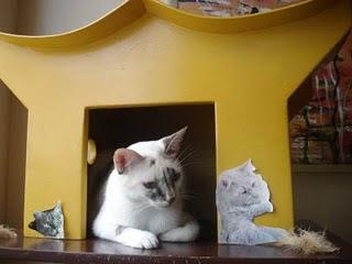 Gata Lili na porta da casinha amarela
