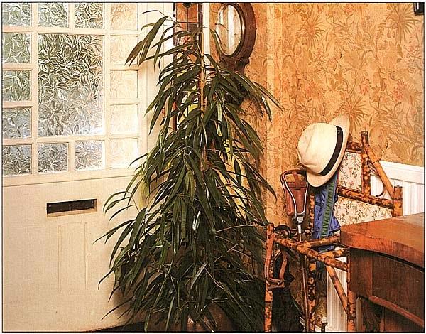 Если ваш холл оформлен под старину или даже в античном стиле, выберите крупное растение типа пальмы, большого фикуса или же высокого бамбука, но убедитесь, что оно выдержит холодные сквозняки зимой