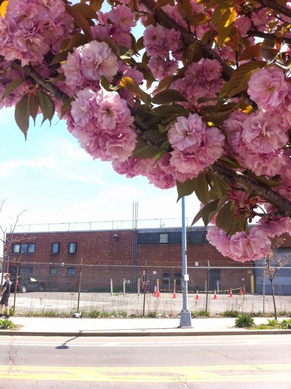 Brooklyn NY Spring