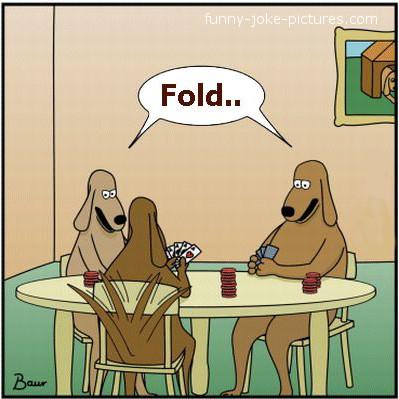 Cat poker puns