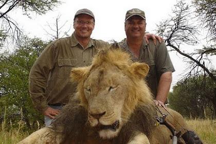 Bunuh Singa Paling Terkenal, Dokter Gigi Diburu Netizen