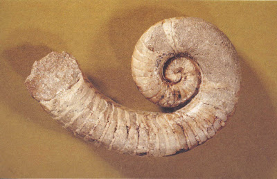 ordovician invertebrata