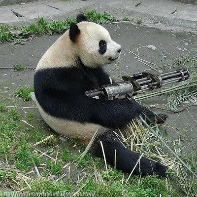 Panda Rambo.
