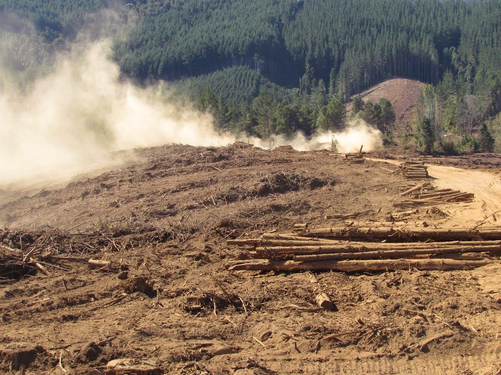 Fundo Forestal Arauco Valdivia, Territorio Ancestral de la Comunidad Mapuche de Lumaco, Lanco